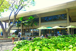 Front of the law building. Two students walk toward the building on a path set between a tree and green foliage. Other students sit at patio tables beneath umbrellas.