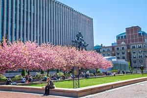 Cherry blossom trees bloom above a courtyard, where students study and socialize